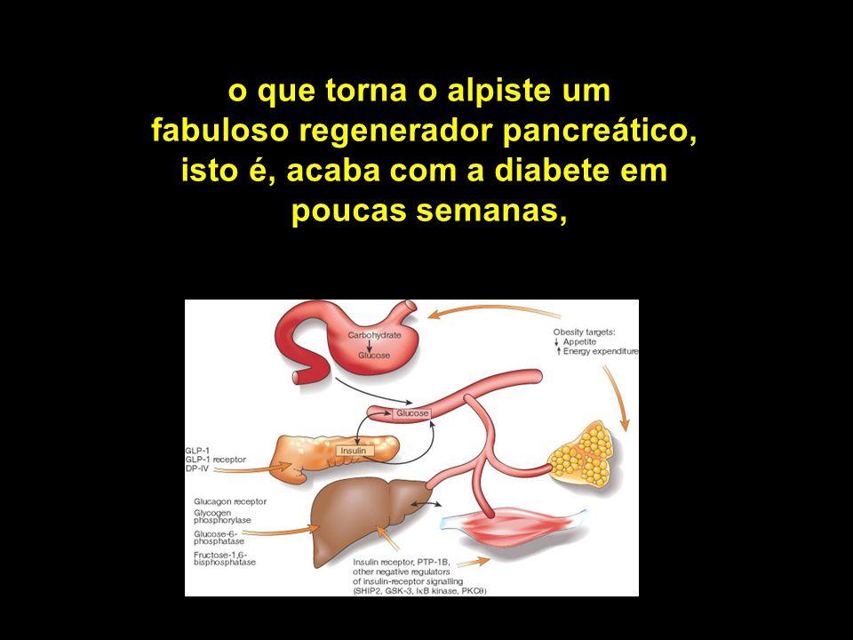 o que torna o alpiste um fabuloso regenerador pancreático,