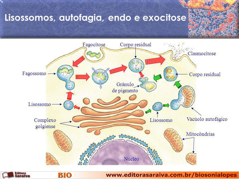 Lisossomos, autofagia, endo e exocitose