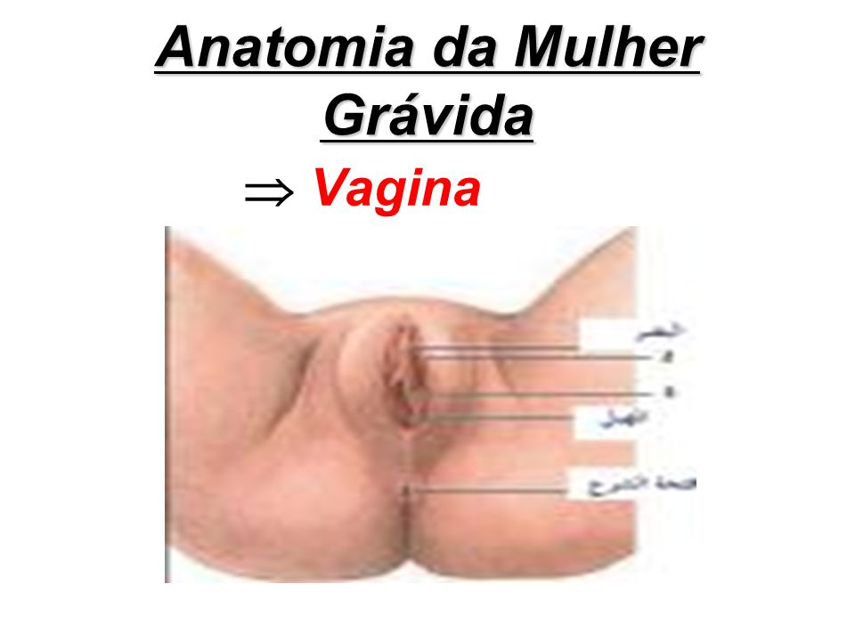 Anatomia da Mulher Grávida
