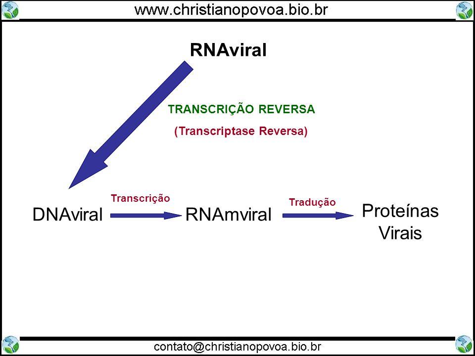 (Transcriptase Reversa)