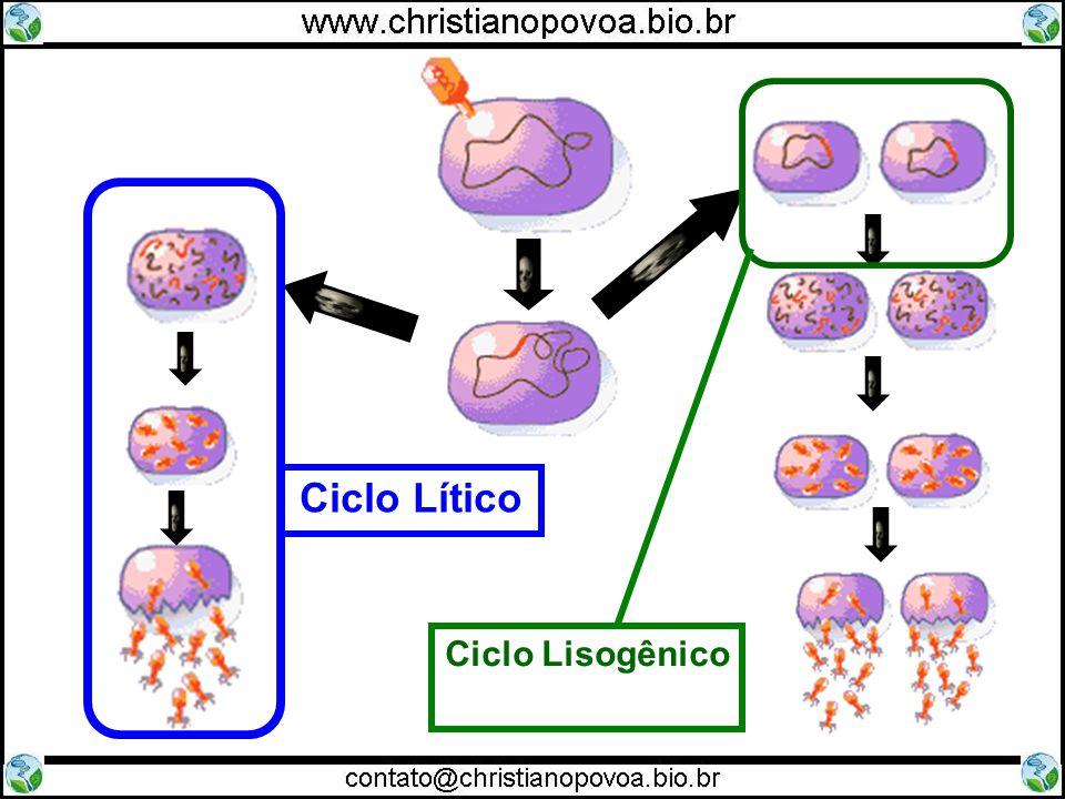Ciclo Lisogênico Ciclo Lítico