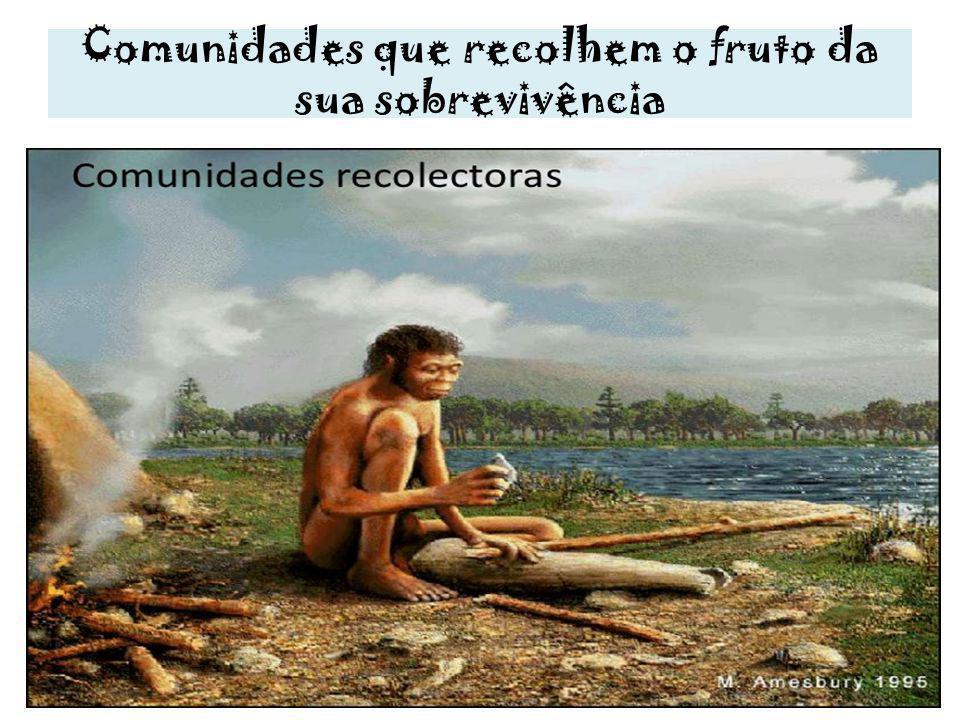 Comunidades que recolhem o fruto da sua sobrevivência
