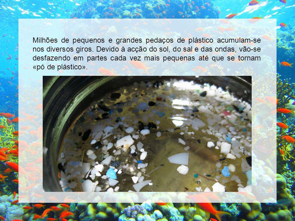 Milhões de pequenos e grandes pedaços de plástico acumulam-se nos diversos giros.