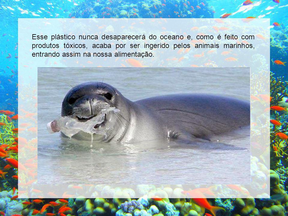 Esse plástico nunca desaparecerá do oceano e, como é feito com produtos tóxicos, acaba por ser ingerido pelos animais marinhos, entrando assim na nossa alimentação.