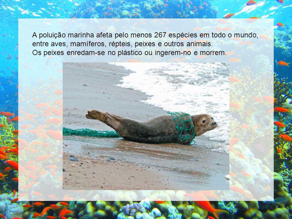 A poluição marinha afeta pelo menos 267 espécies em todo o mundo, entre aves, mamíferos, répteis, peixes e outros animais.