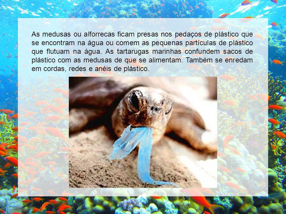 As medusas ou alforrecas ficam presas nos pedaços de plástico que se encontram na água ou comem as pequenas partículas de plástico que flutuam na água.