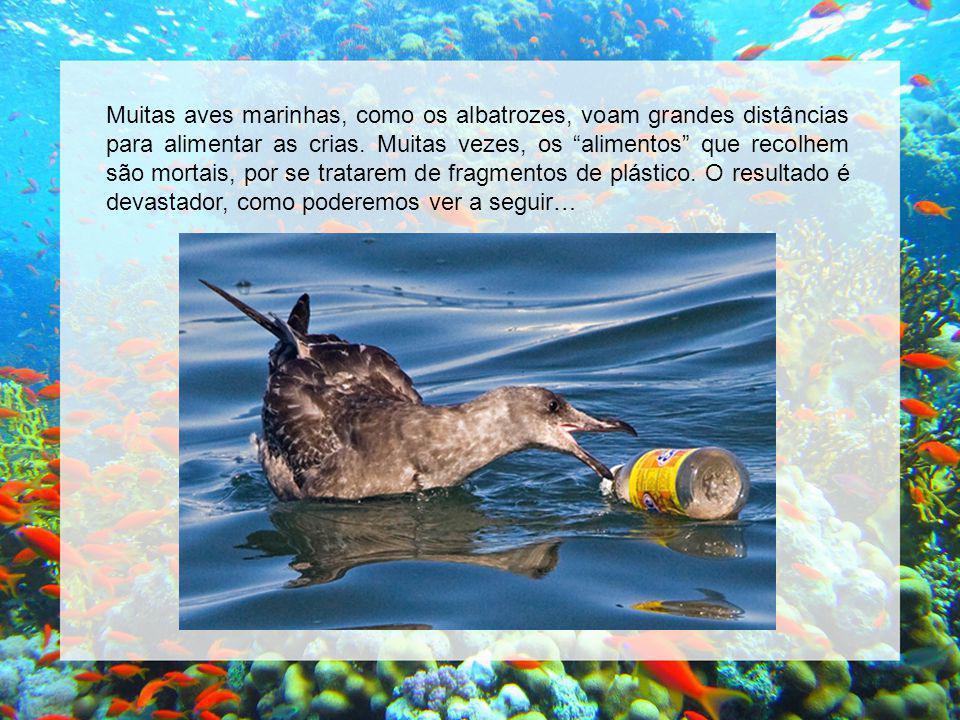 Muitas aves marinhas, como os albatrozes, voam grandes distâncias para alimentar as crias.