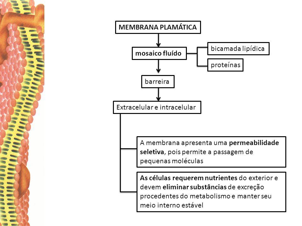 MEMBRANA PLAMÁTICA bicamada lipídica. mosaico fluído. proteínas. barreira. Extracelular e intracelular.