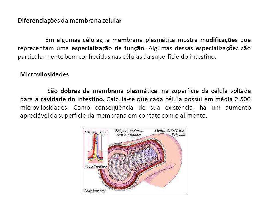 Diferenciações da membrana celular