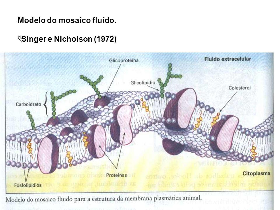 Modelo do mosaico fluído.