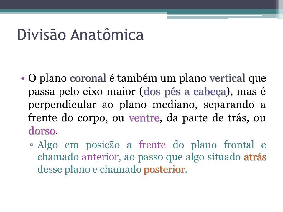 Divisão Anatômica