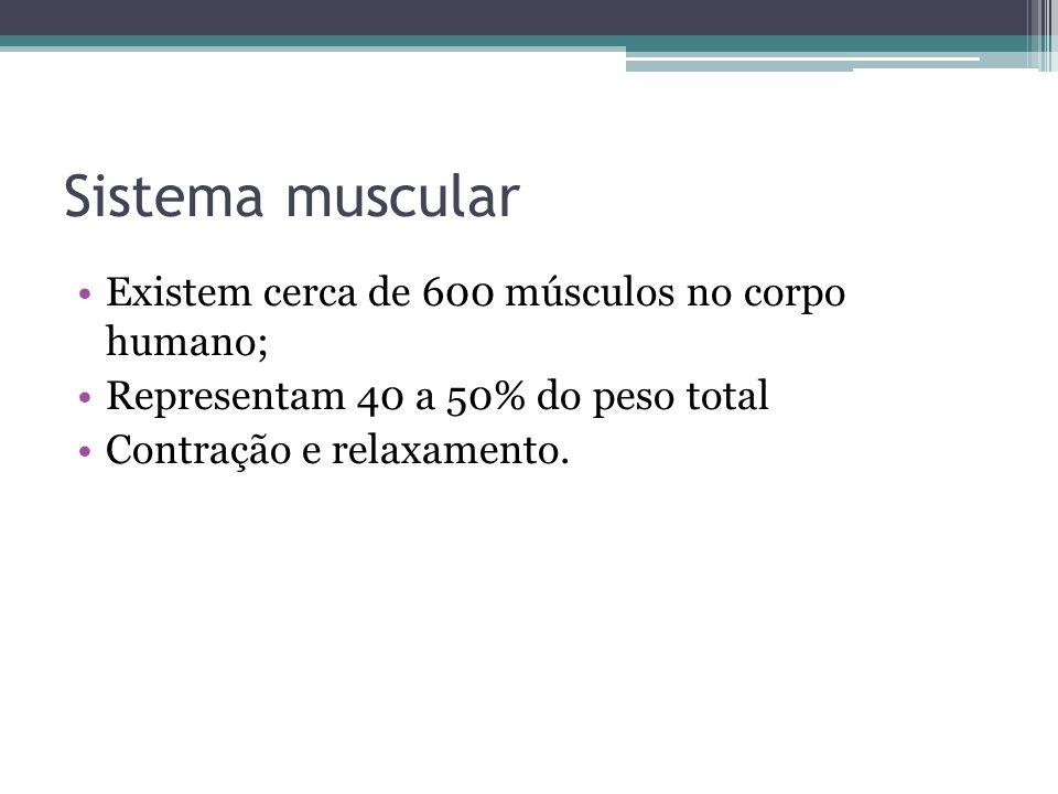 Sistema muscular Existem cerca de 600 músculos no corpo humano;