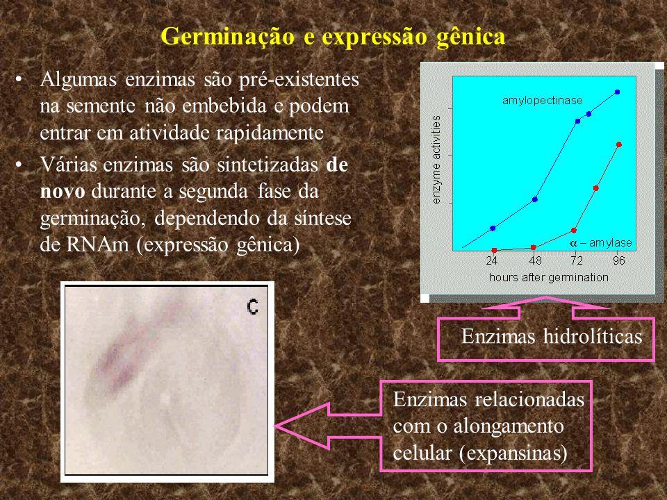 Germinação e expressão gênica