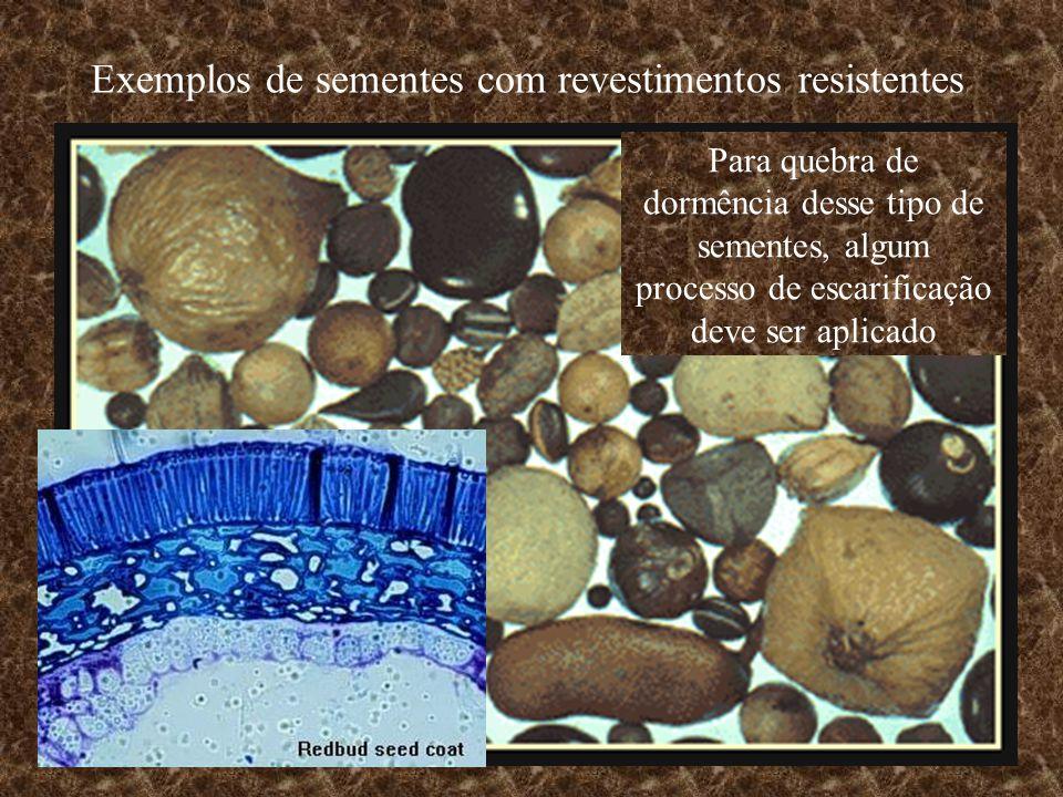Exemplos de sementes com revestimentos resistentes