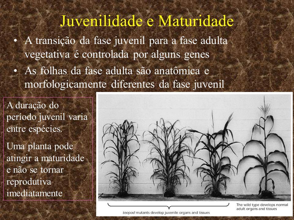 Juvenilidade e Maturidade