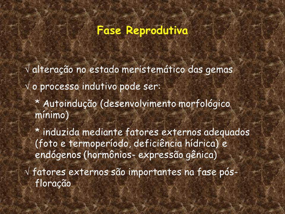 Fase Reprodutiva  alteração no estado meristemático das gemas