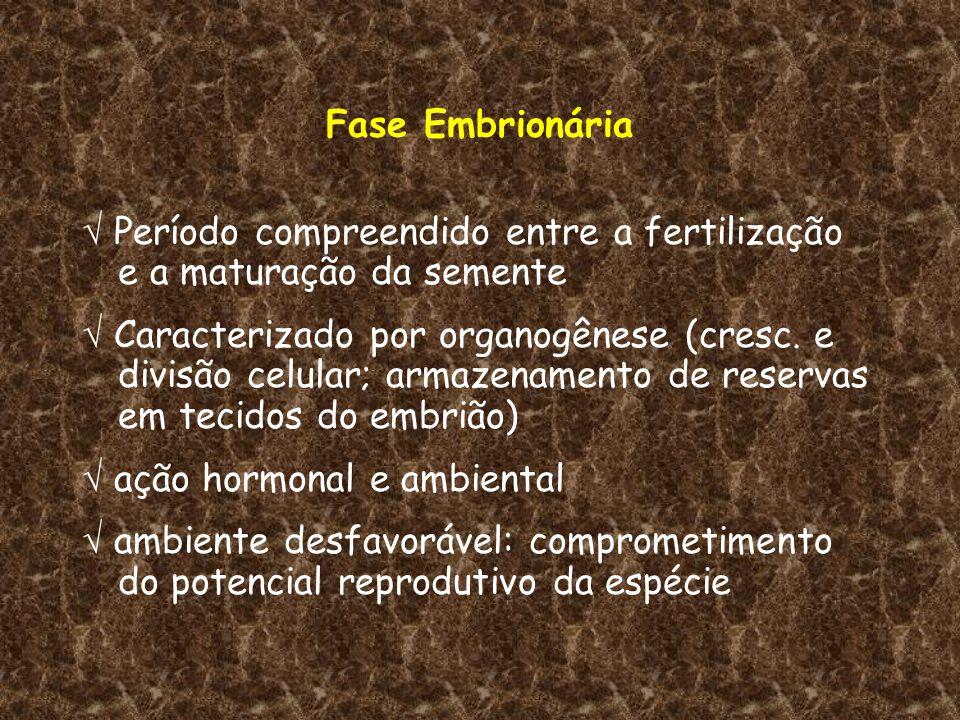 Fase Embrionária  Período compreendido entre a fertilização e a maturação da semente.