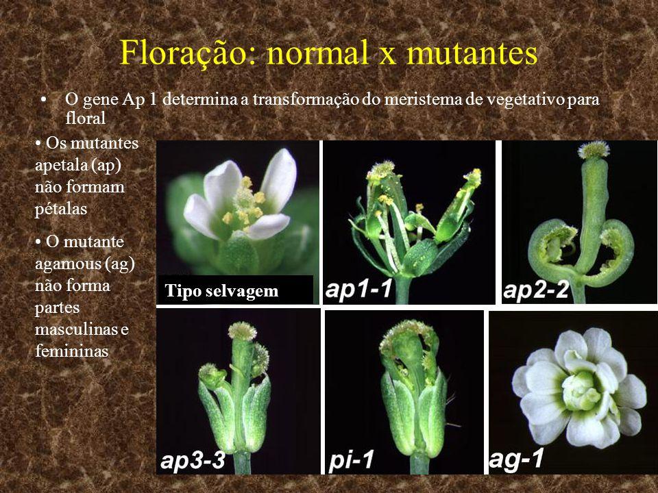 Floração: normal x mutantes