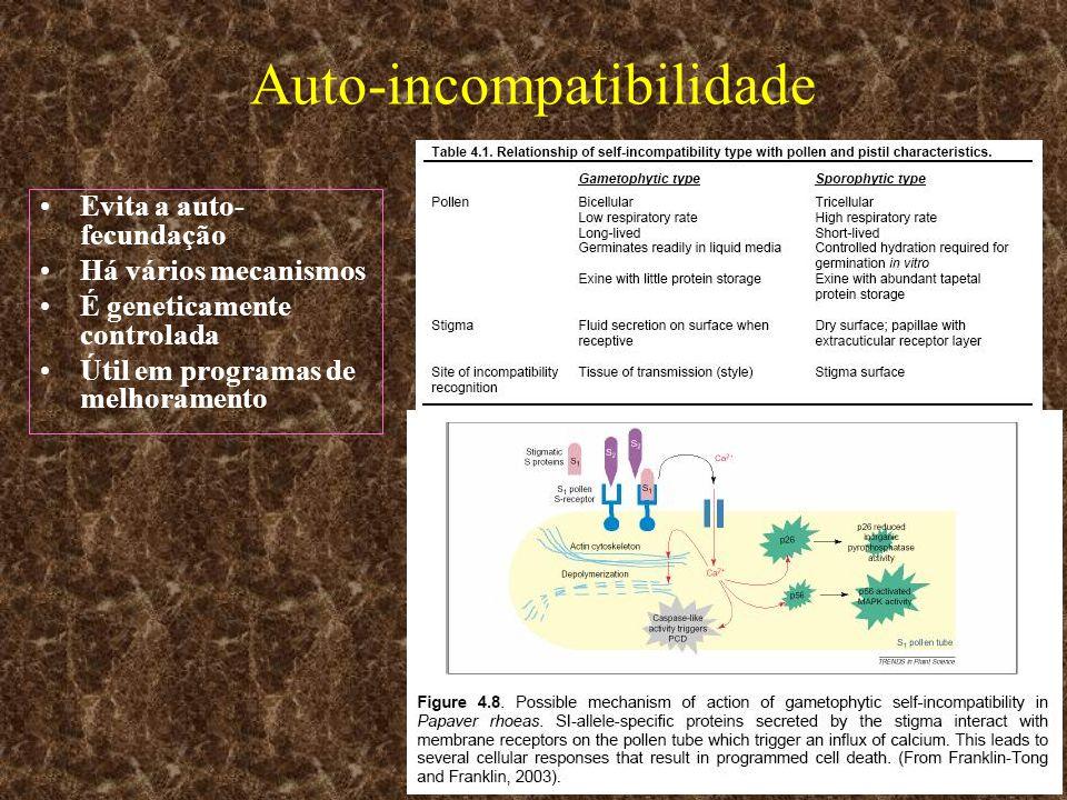 Auto-incompatibilidade