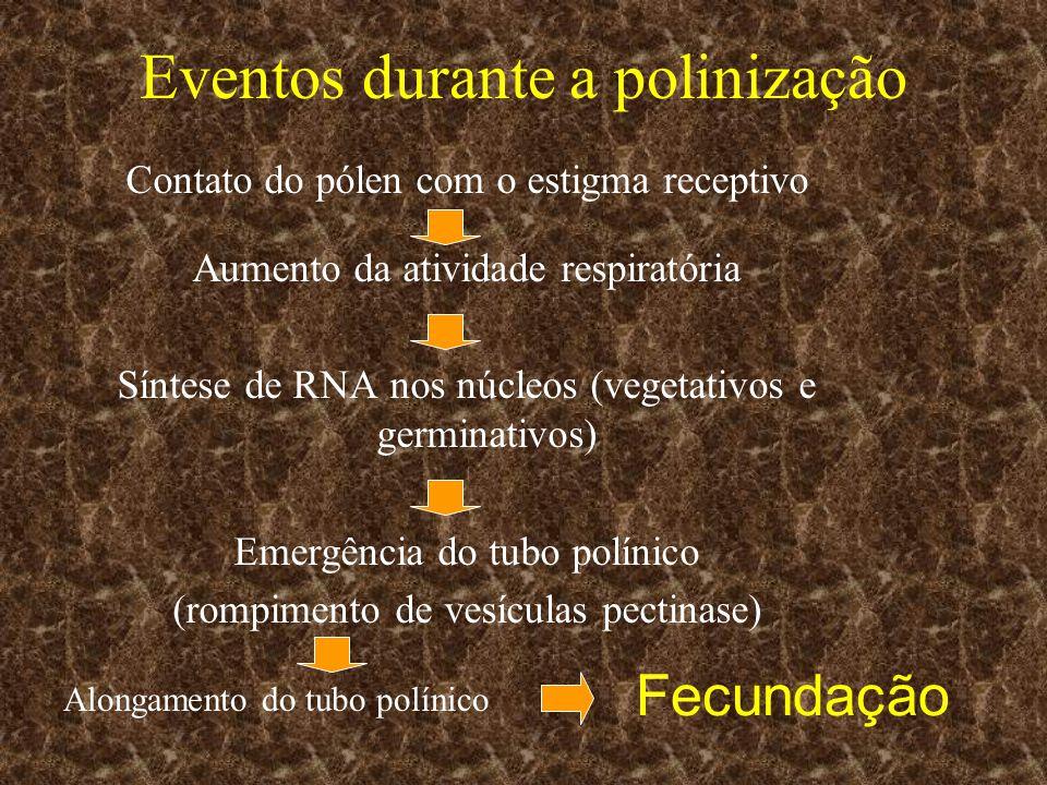 Eventos durante a polinização