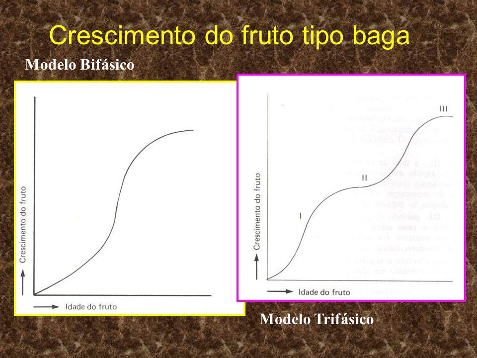 Crescimento do fruto tipo baga