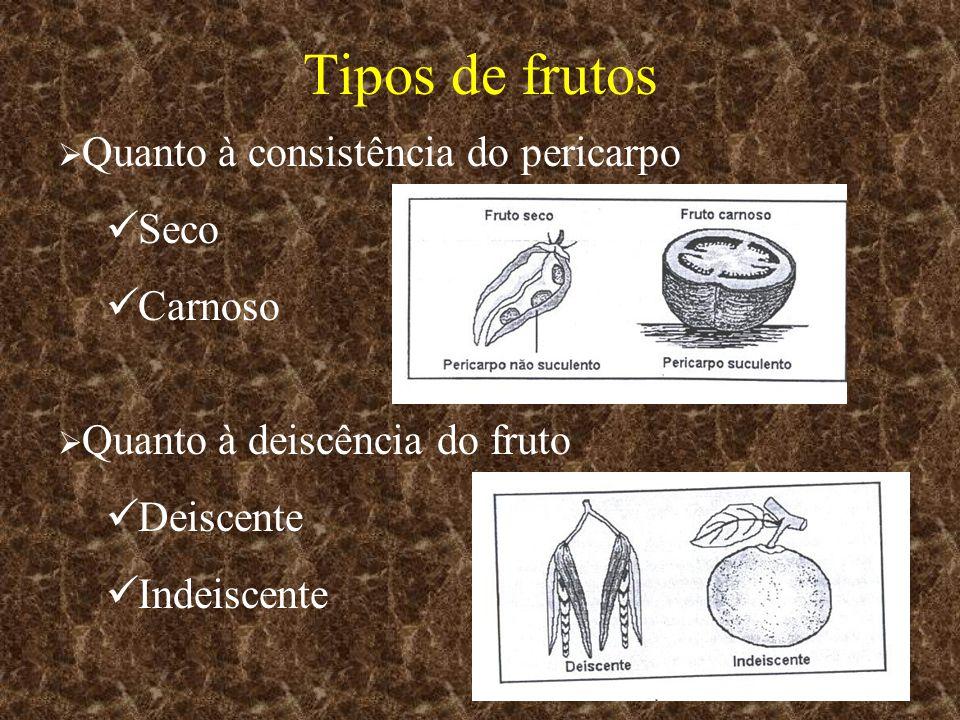 Tipos de frutos Seco Carnoso Deiscente Indeiscente