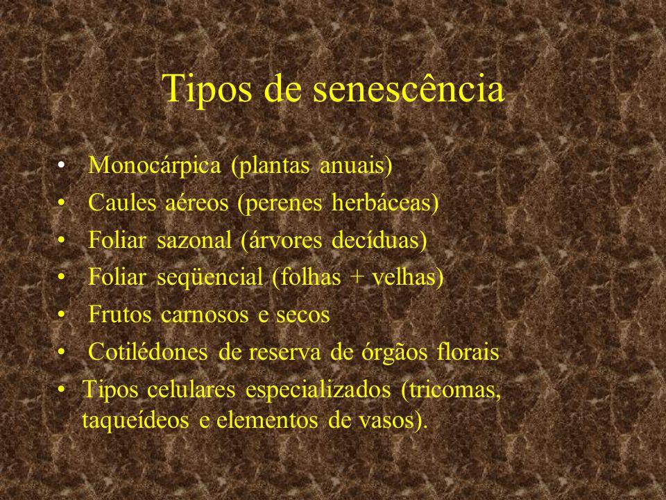 Tipos de senescência Monocárpica (plantas anuais)