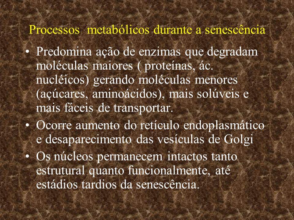 Processos metabólicos durante a senescência