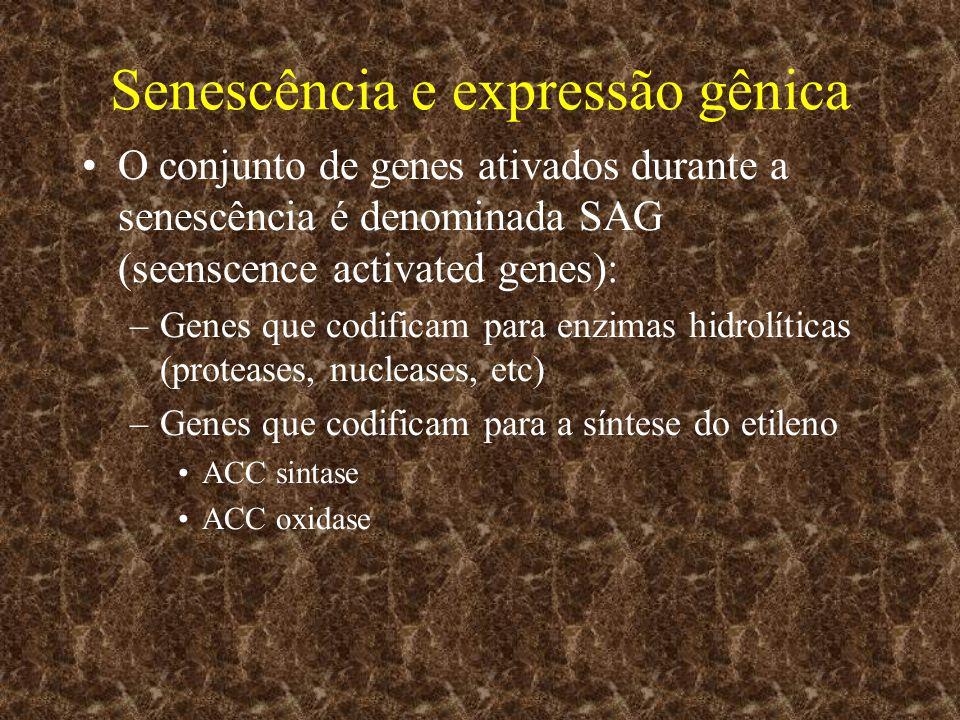 Senescência e expressão gênica