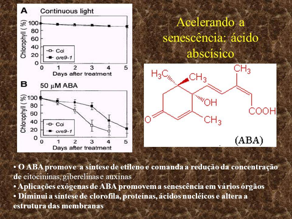 Acelerando a senescência: ácido abscísico