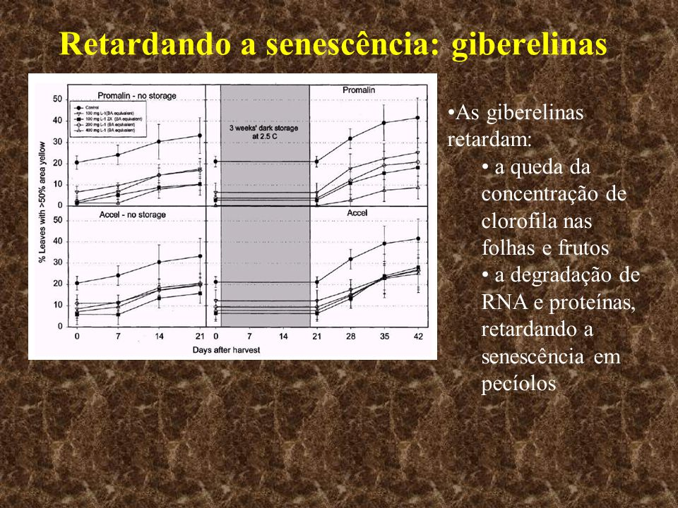 Retardando a senescência: giberelinas