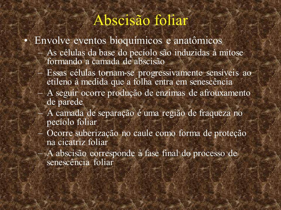 Abscisão foliar Envolve eventos bioquímicos e anatômicos