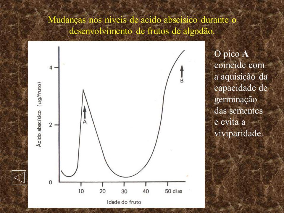 Mudanças nos níveis de acido abscísico durante o desenvolvimento de frutos de algodão.