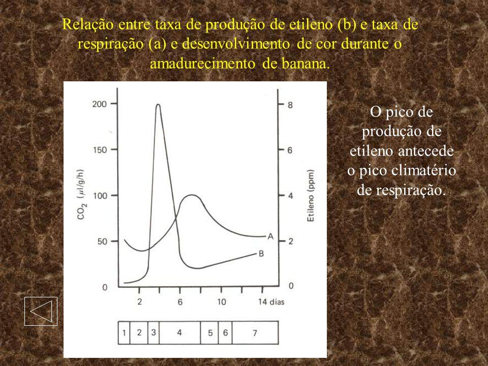 Relação entre taxa de produção de etileno (b) e taxa de respiração (a) e desenvolvimento de cor durante o amadurecimento de banana.