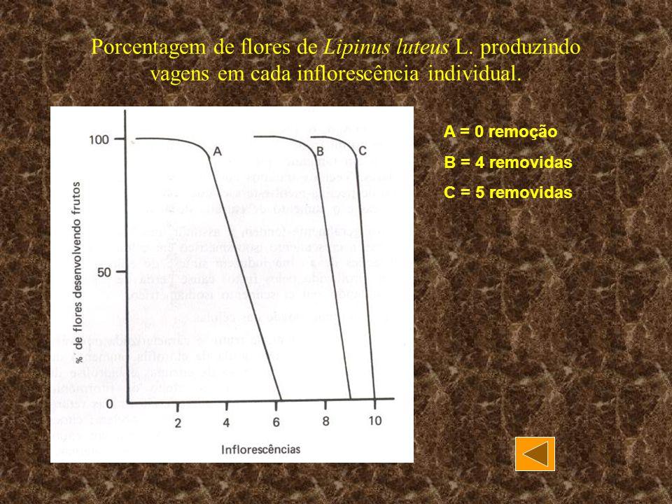Porcentagem de flores de Lipinus luteus L