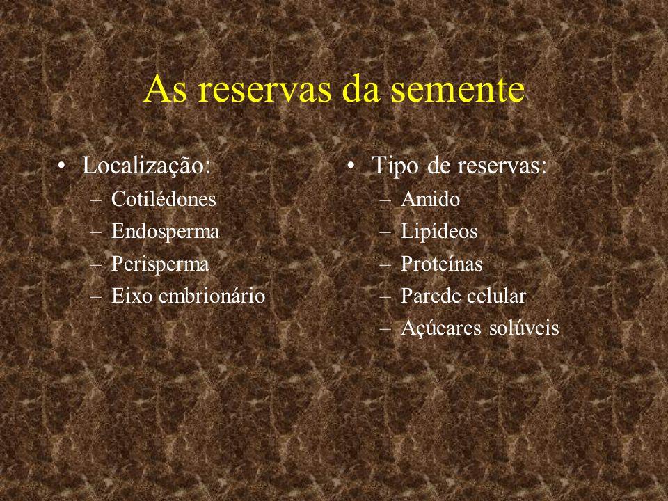As reservas da semente Localização: Tipo de reservas: Cotilédones