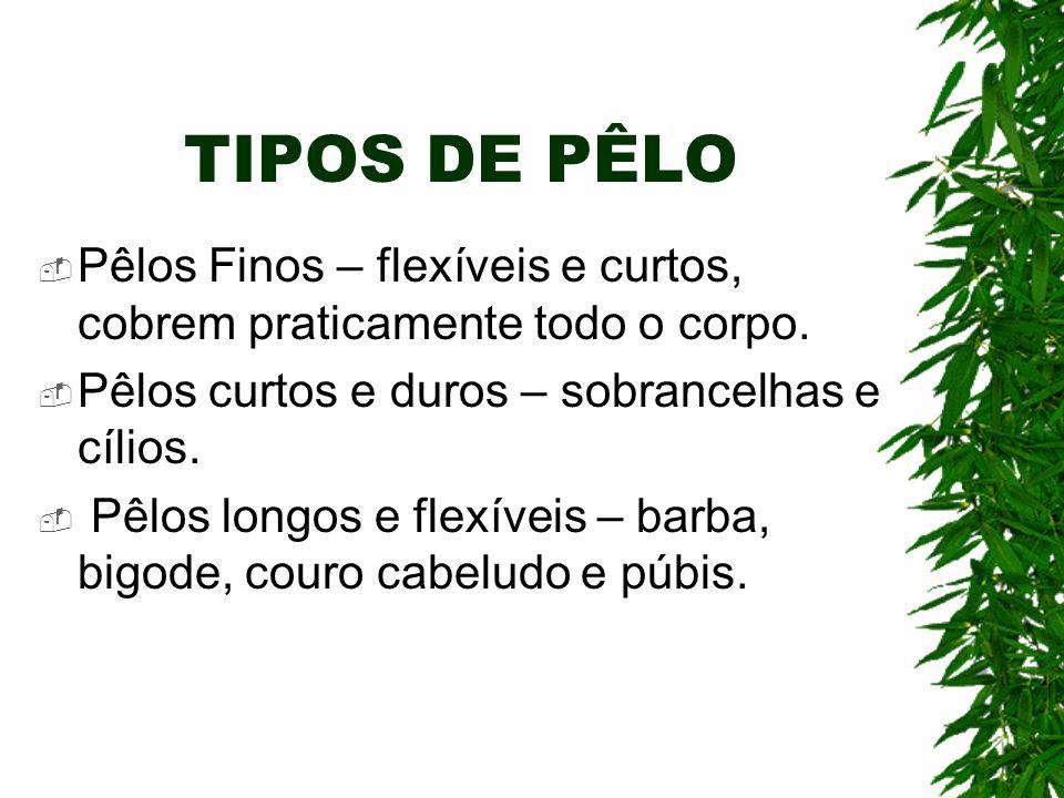 TIPOS DE PÊLO Pêlos Finos – flexíveis e curtos, cobrem praticamente todo o corpo. Pêlos curtos e duros – sobrancelhas e cílios.