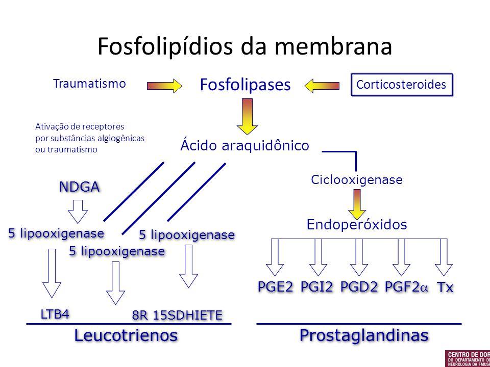 Fosfolipídios da membrana