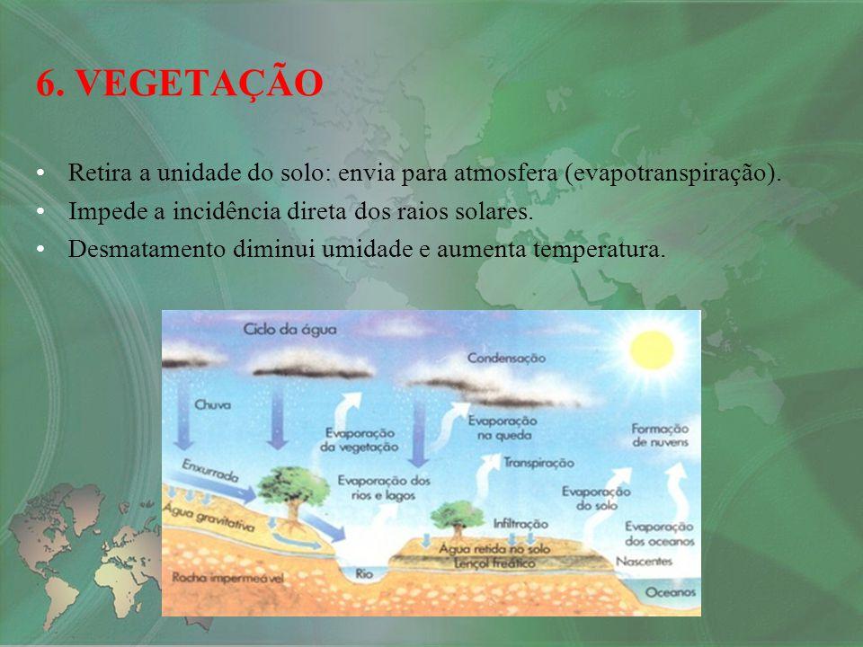 6. VEGETAÇÃO Retira a unidade do solo: envia para atmosfera (evapotranspiração). Impede a incidência direta dos raios solares.