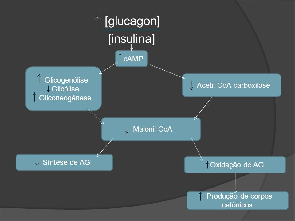 [glucagon] [insulina]