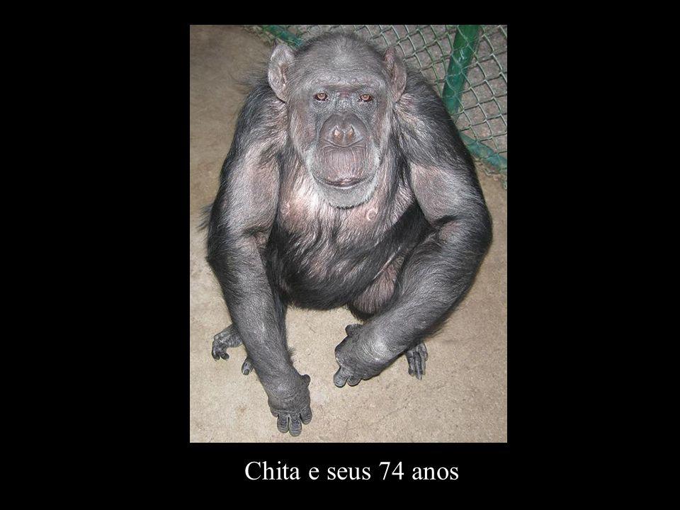 Chita e seus 74 anos