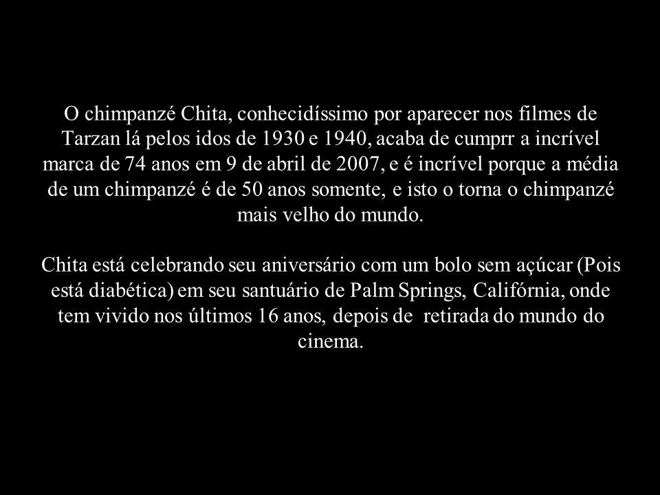 O chimpanzé Chita, conhecidíssimo por aparecer nos filmes de Tarzan lá pelos idos de 1930 e 1940, acaba de cumprr a incrível marca de 74 anos em 9 de abril de 2007, e é incrível porque a média de um chimpanzé é de 50 anos somente, e isto o torna o chimpanzé mais velho do mundo.