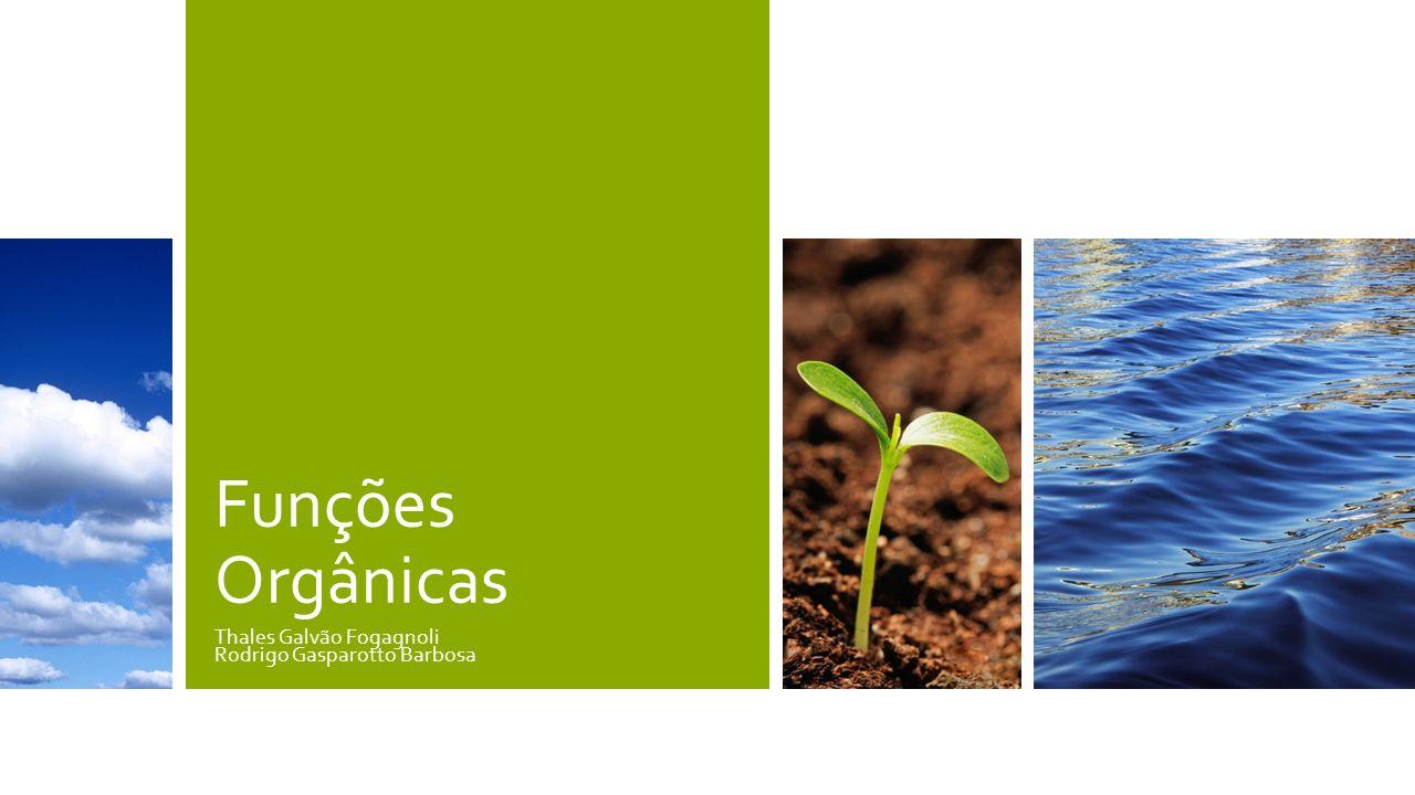 Thales Galvão Fogagnoli Rodrigo Gasparotto Barbosa