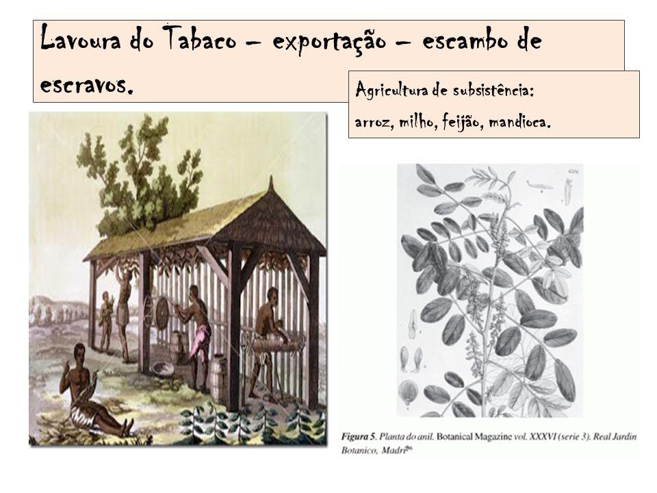 Lavoura do Tabaco – exportação – escambo de escravos.