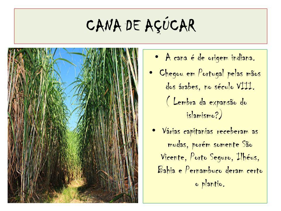 CANA DE AÇÚCAR A cana é de origem indiana.