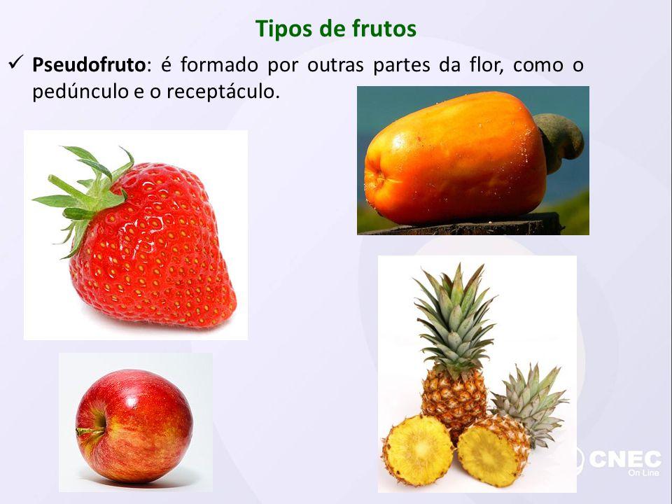 Tipos de frutos Pseudofruto: é formado por outras partes da flor, como o pedúnculo e o receptáculo.
