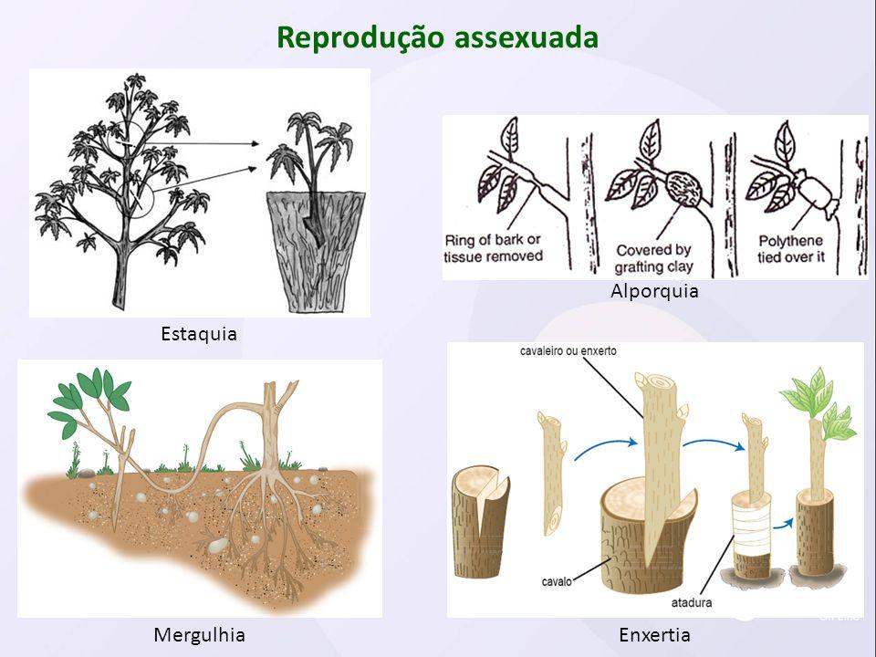 Reprodução assexuada Alporquia Estaquia Mergulhia Enxertia