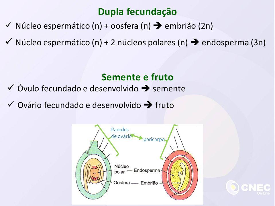 Dupla fecundação Semente e fruto