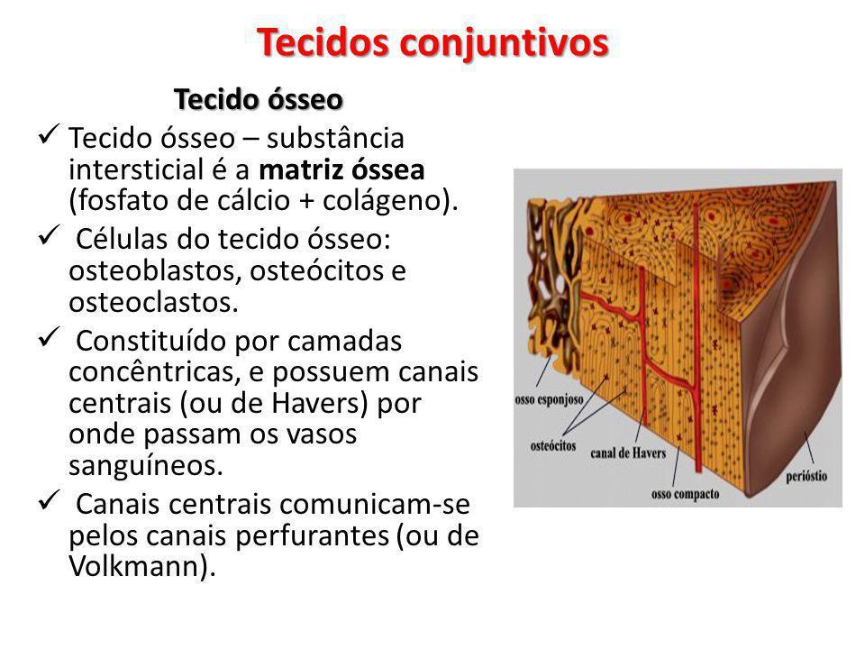Tecidos conjuntivos Tecido ósseo
