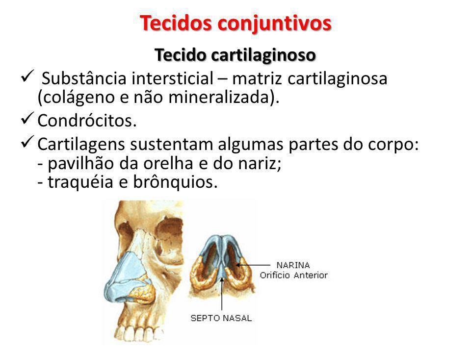 Tecidos conjuntivos Tecido cartilaginoso